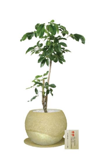 和 植物、観葉植物レンタル、観葉植物リース、漆喰鉢