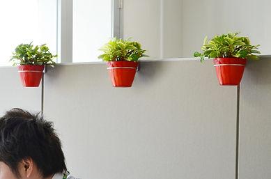 観葉植物レンタル、労働環境向上、ストレス軽減、視覚疲労軽減、社内に植物を設置して癒しを
