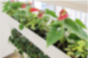 アンスリウム、花観葉、植栽リース