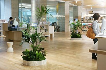 観葉植物レンタルで、空間のイメージアップ