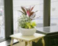 観葉植物、レンタル、リース、窓際に寄せ植えの観葉植物