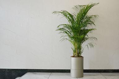災害用品、植物リース、観葉植物レンタル、貸し植木