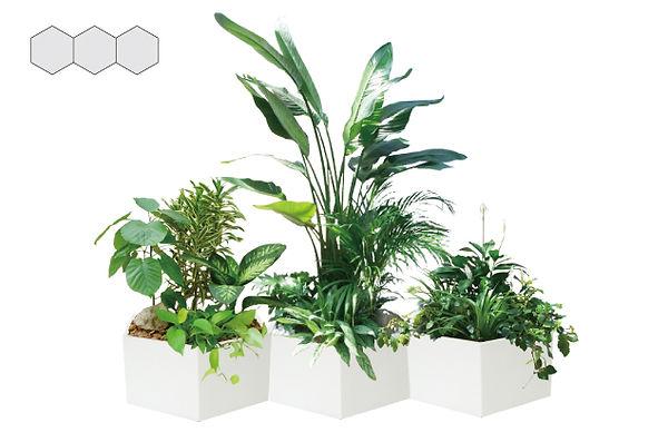 商業施設、デパート植物