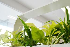 パーテション植物、本厚木