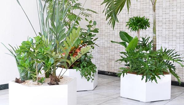 観葉植物レンタル、エントランス植物、エントランスにダイナミックな植物