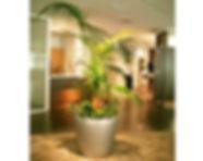 観葉植物、リース エントランスにケンチャヤシをベースにボリュームある寄せ植え スポットライトを当てて存在感を際立てます