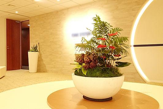 会社の入口を観葉植物でコーディネート、鮮やかな演出でお客様をお出迎えします。貸し植木、貸し木
