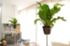 観葉植物レンタル、オフィス、メンタルヘルスケア、植物でストレス対策