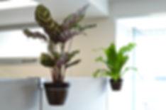 空中に植物、メンタルケア、茅ヶ崎市