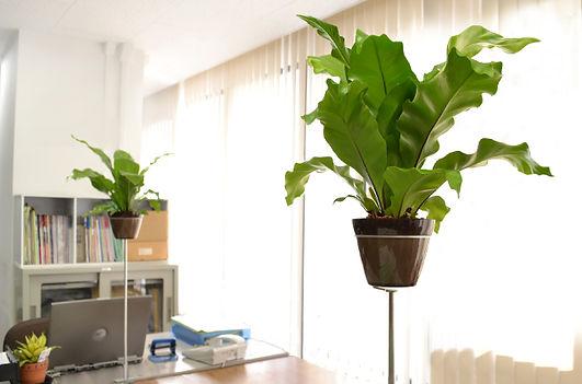 オリジナル商品フープ。オフィス内に植物を取り入れることで、ストレス軽減効果など様々な効能が発揮されます