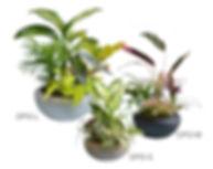 カウンター、受付に置く観葉植物