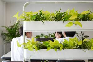 空間のしきりに観葉植物