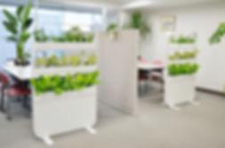 オフィスグリーン、植木レンタル