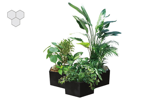 デパート植物、インパクトある植物を置くことで、イメージアップ