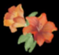 estampas-flores.png