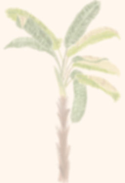 fundo-palmeira.jpg