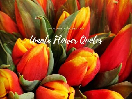 ♡Umate Flower Quotes♡