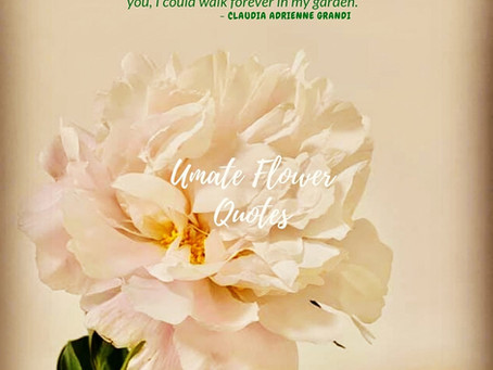 ♧ Umate Flower Quotes ♧ Hong Kong Florist excellent in Quality