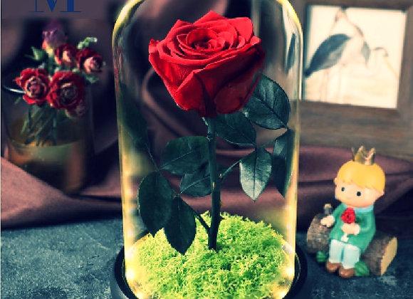 Preserved Flowers Red Rose on Grass (with light )永生花 保鮮花 草地紅玫瑰 (帶燈)
