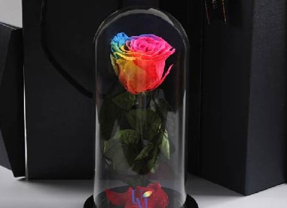 Preserved Flowers Single Standing Roses Rainbow Color 永生花/保鮮花