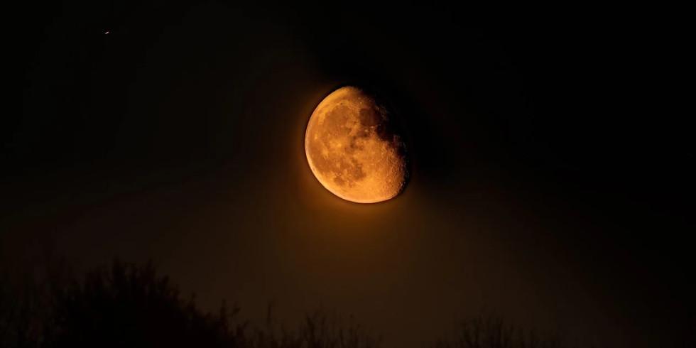 Sylvan Nights - A Super Moon Lit Walk with Artist Steve Geliot