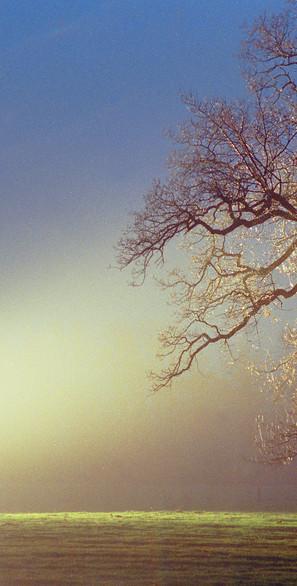 tree and light copy new sat.jpg