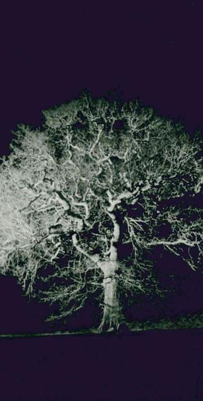 White Tree - photo by Jamie Lau (2).jpg