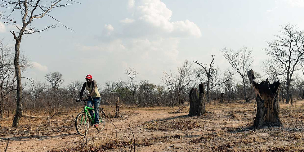 ONLINE: Conversation Piece: Miti Yangu Reforesting Project, Zimbabwe