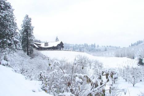 Snow Silvara.jpg