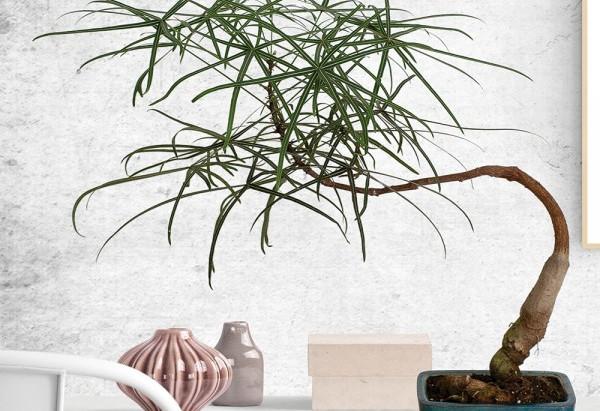 Australian Native Indoor Plants