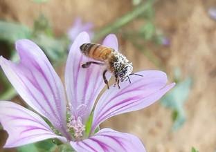 דבורים1.jpg