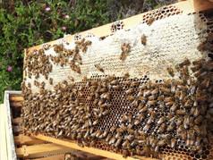 דבורים.jpg