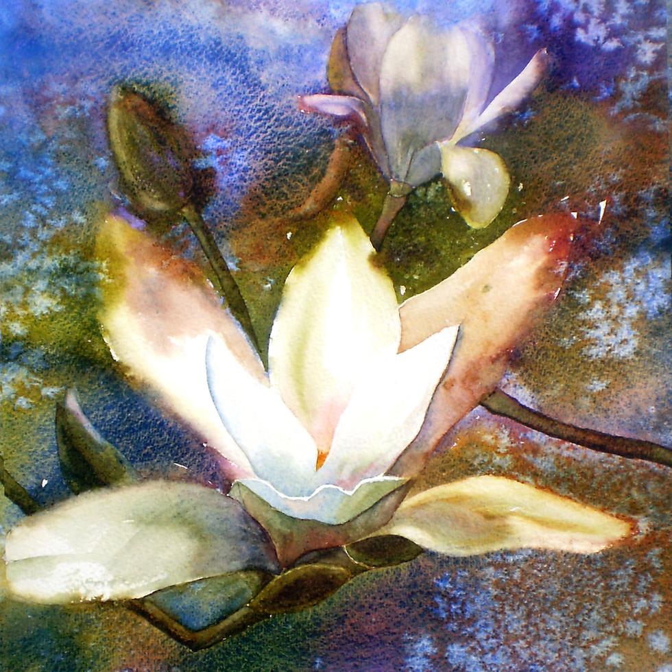 Magnolia and Scilla at Knightshayes crop
