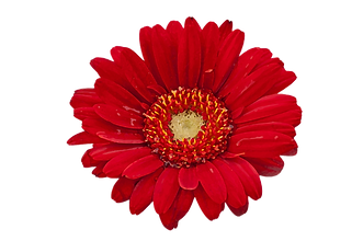flower-watercolor-red.png