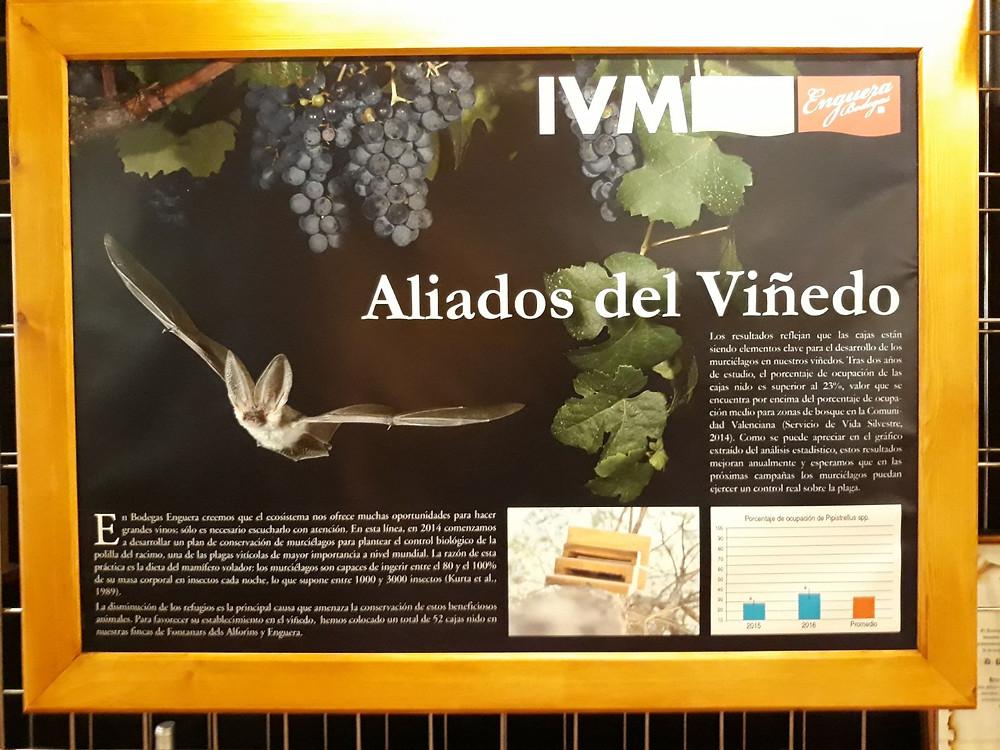 Morcegos e vinho