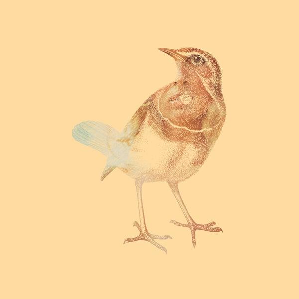 DirtyBird1.jpg