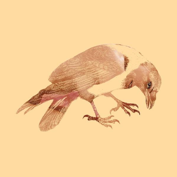 DirtyBird12.jpg