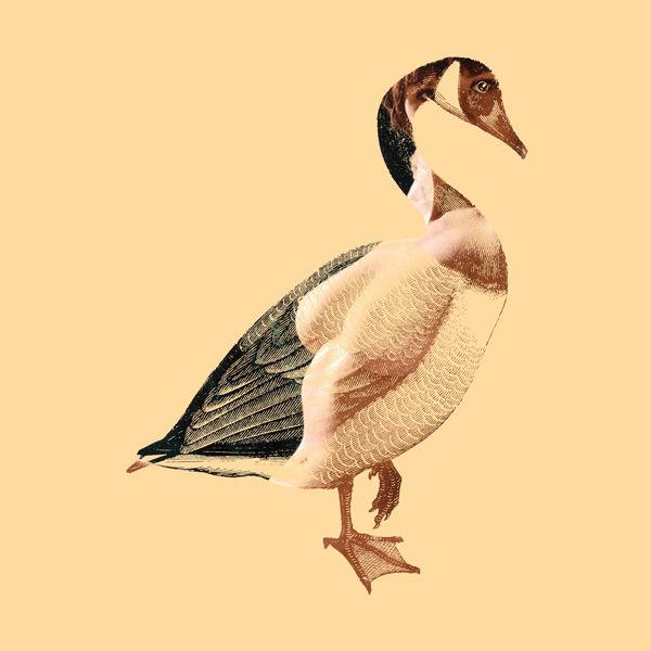 DirtyBird4.jpg
