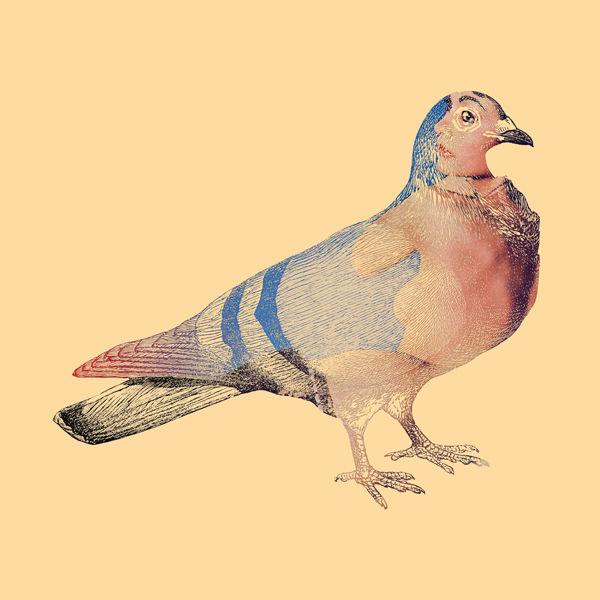 DirtyBird5.jpg