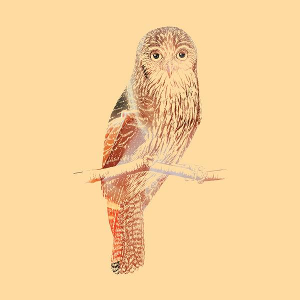 DirtyBird13.jpg