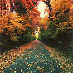 Memphis in Fall