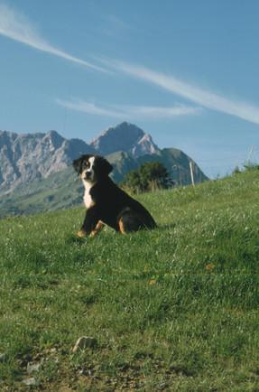 Tierbetreuung-Oberallgäu