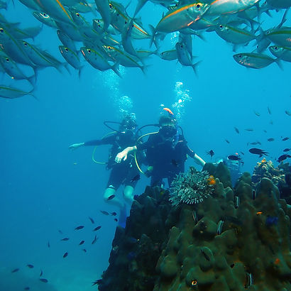 First time divers pictured with a school of Bigeye Snapperfish