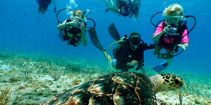 Children diving with a turtle