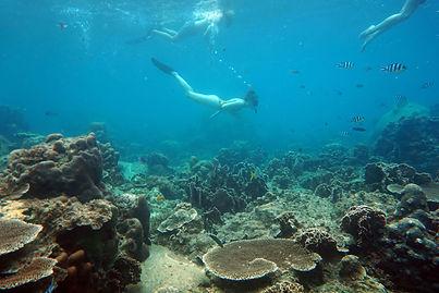 Snorkeling in koh Tao