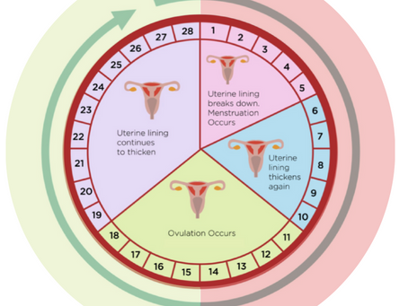 Your Cycle and the Fertility Window