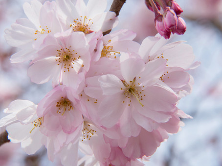 Fertility Boosting Spring Cleanse