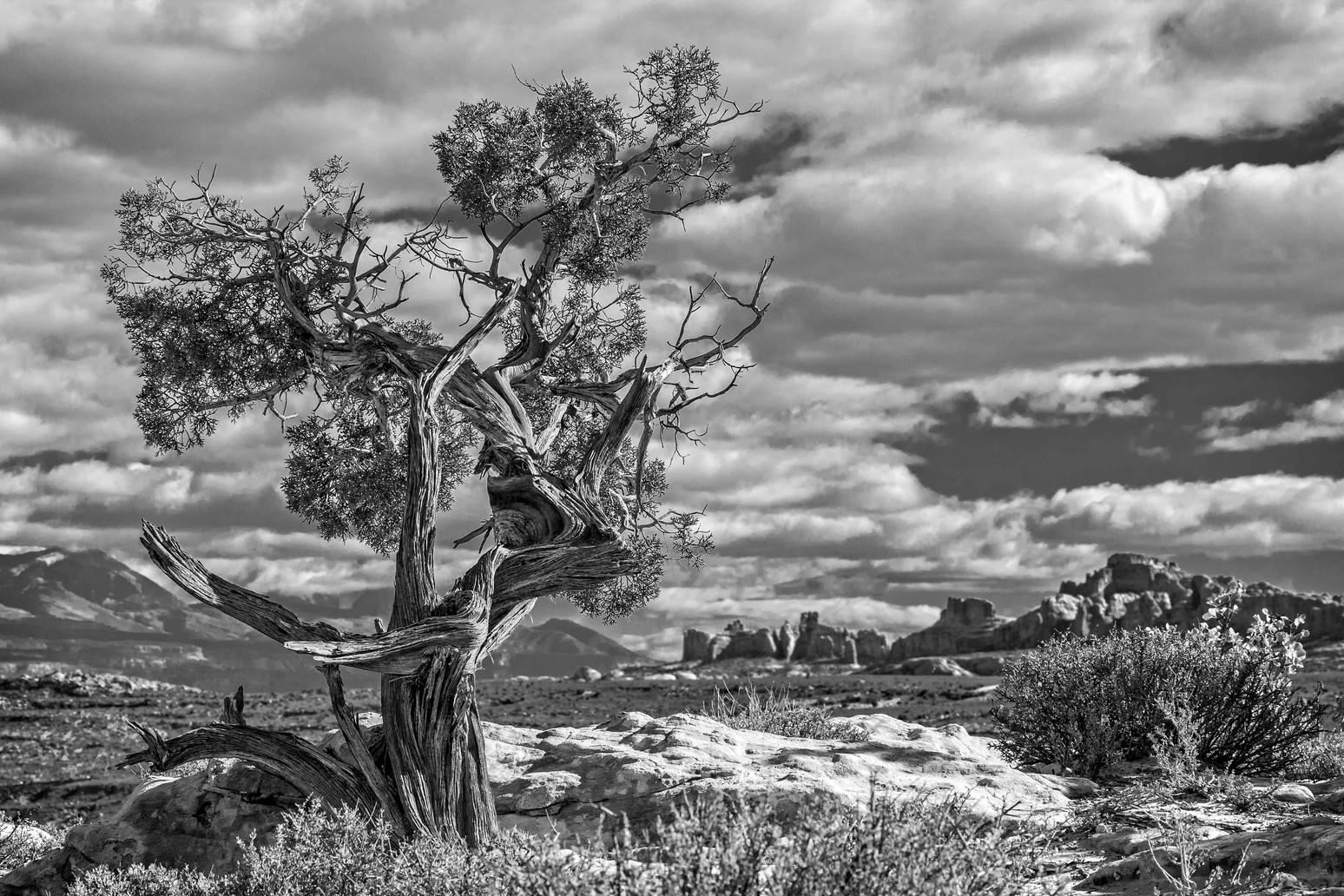 Ancient Overlook
