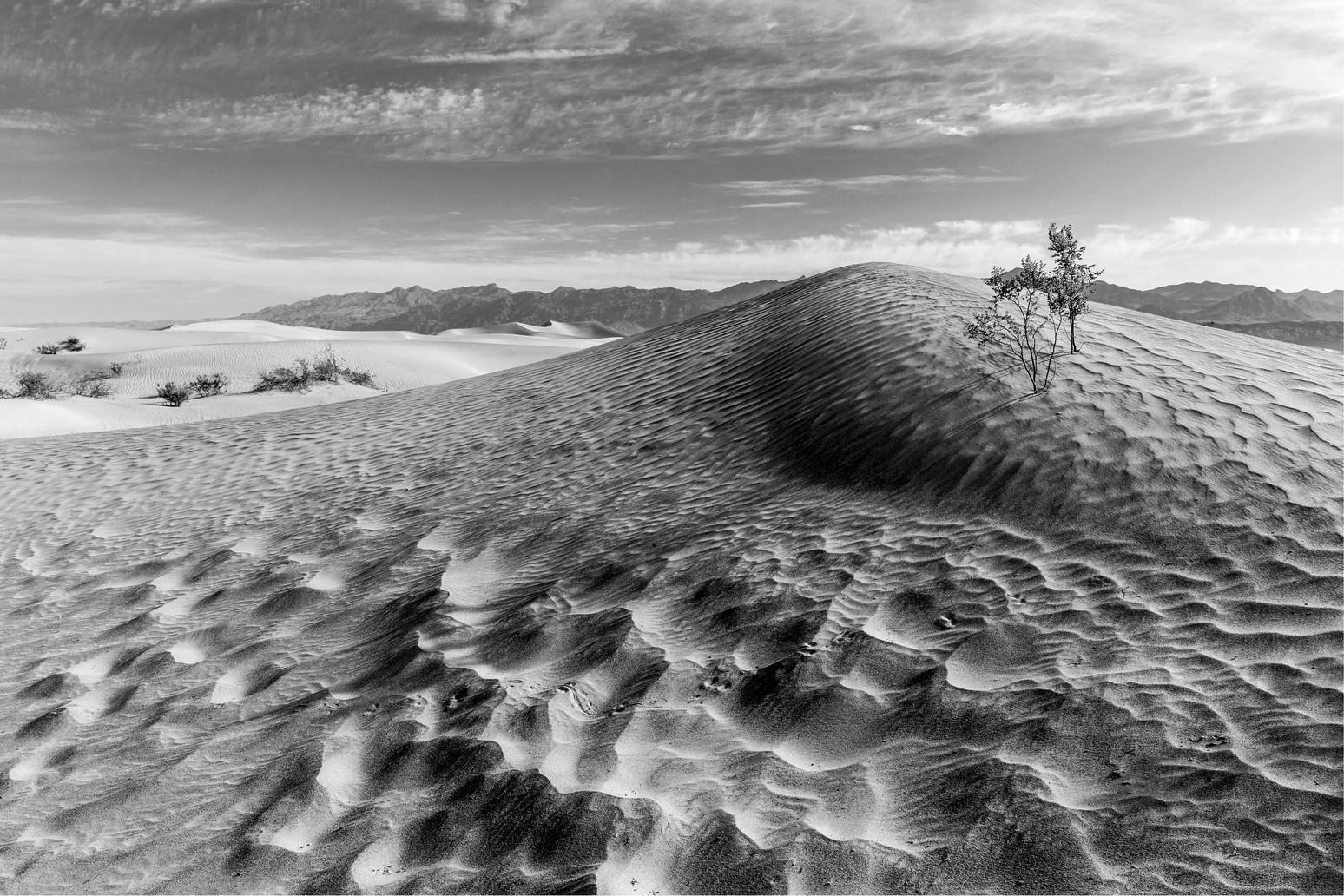Morning Mesquite Shadows