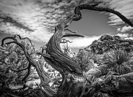 Awarded Nominee in the 4th Annual Fine Art Photography Awards 2018!